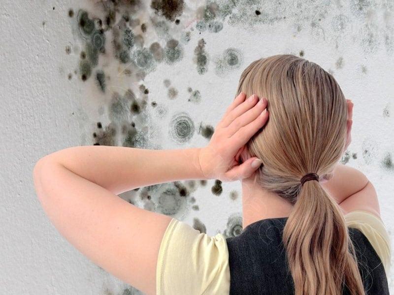 плесень на стенах
